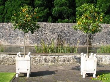 Gojenje citrusov v posodah