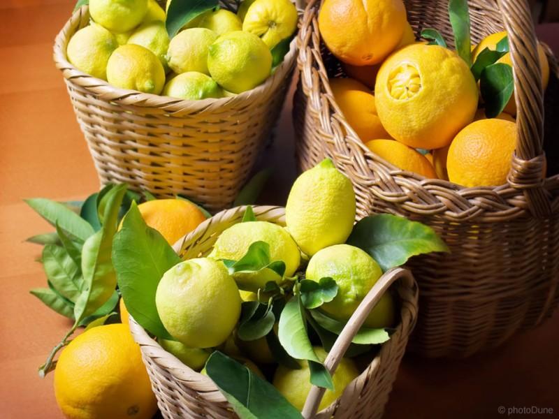 Mandarina, pomaranča, limona in ostali citrusi