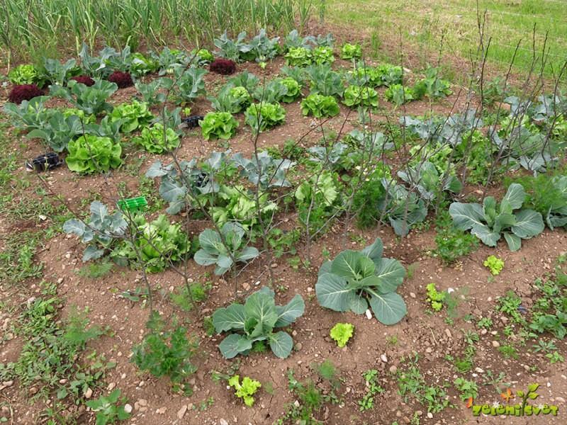 Kolobarjenje na zelenjavnem vrtu