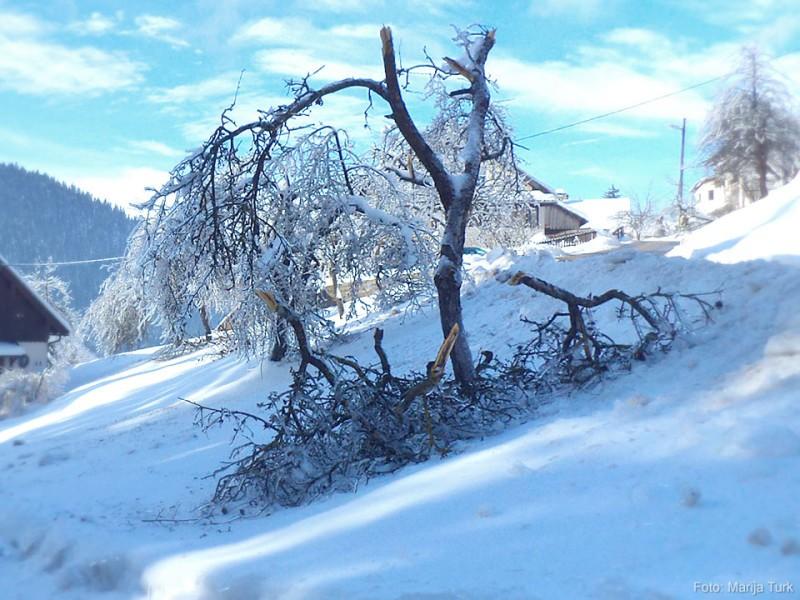 Sadovnjak in reševanje težav po snegolomu in žledolomu