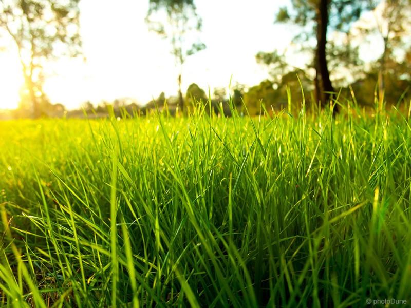 Za vitalno travo brez bolezni