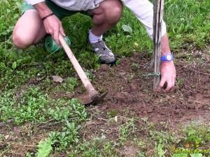 Okopavanje tal pod drevesnimi krošnjami