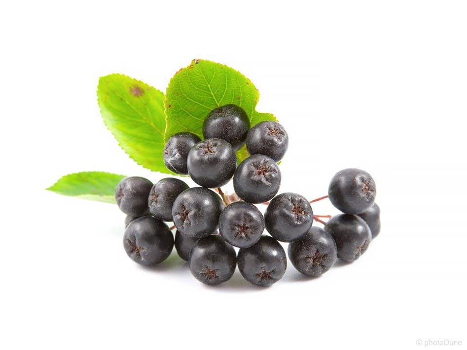 aronija in plod črne aronije