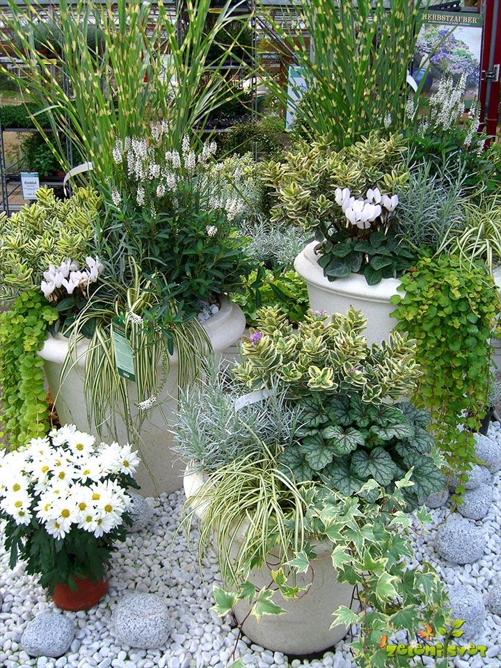 Cvetoče in strukturne rastline v harmonični zasaditvi.