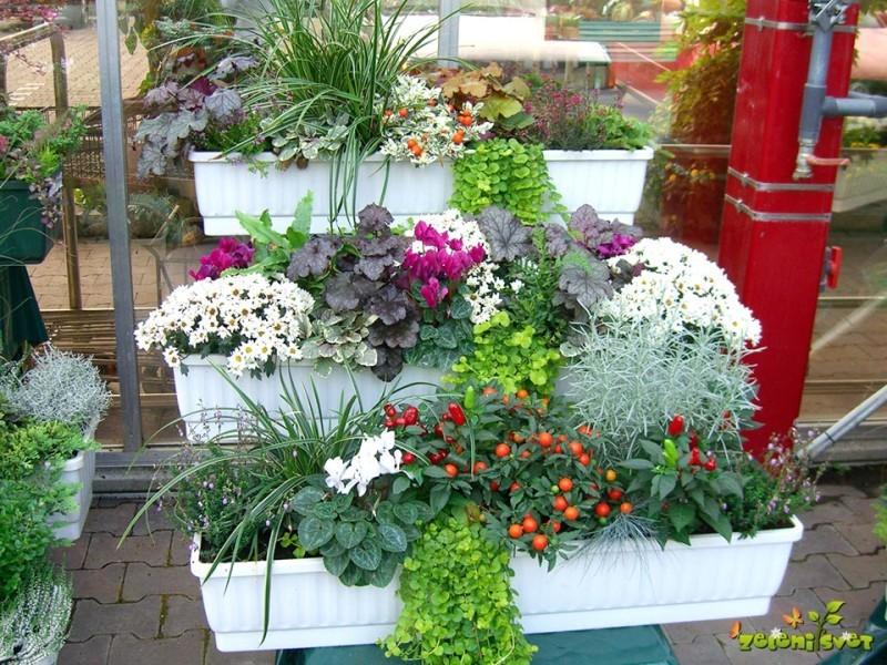 Korita za jesenska okna z cvetočimi in strukturnimi rastlinami.