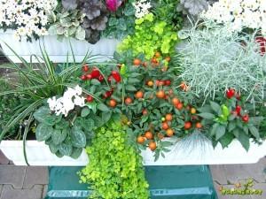 Ne pozabimo na rastline z plodovi.
