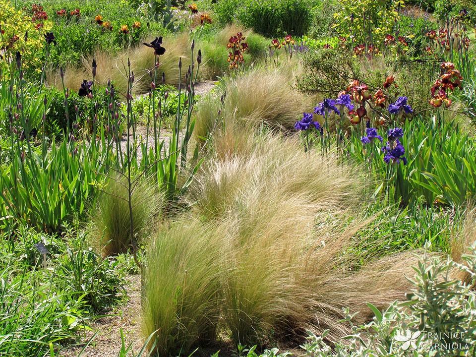 Okrasne trave