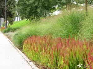 Pokrovne trave