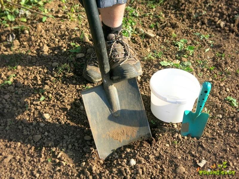 Analiza tal v vrtu