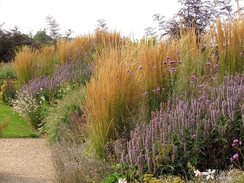 Okrasne trave so prave vrtne lepotice