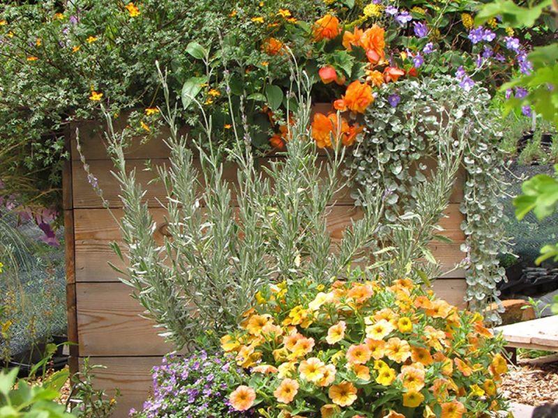 Barvne kombinacije v balkonskem cvetju