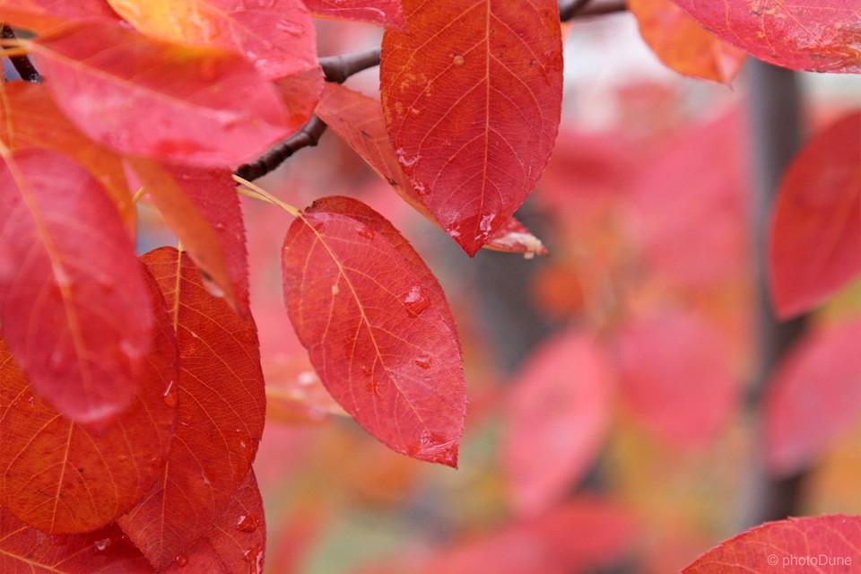 Jesenska barva listov
