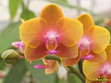 3 nasveti za gojenje orhidej