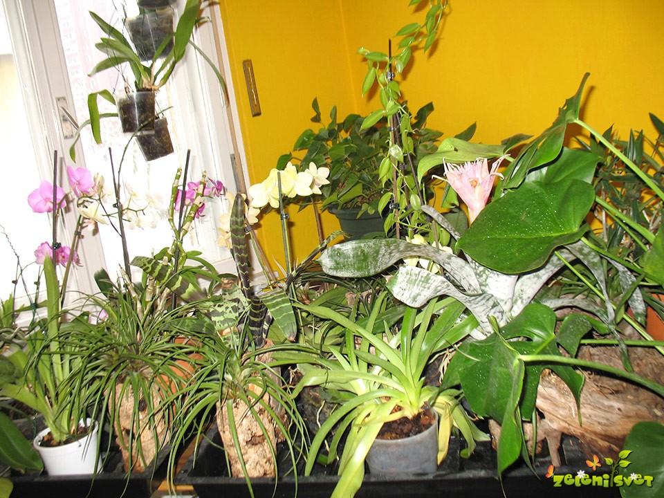 Orhideje in druge tropske rastline postavimo ob okno na poplavni pladenj. Tako dobijo potrebno vlago in svetlobo. Lažje bo tudi zalivanje.