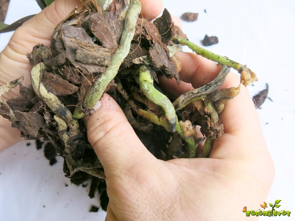 razrahljamo-substrat-korenin