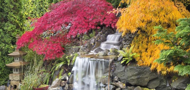 Japonski javorji za vsak vrt
