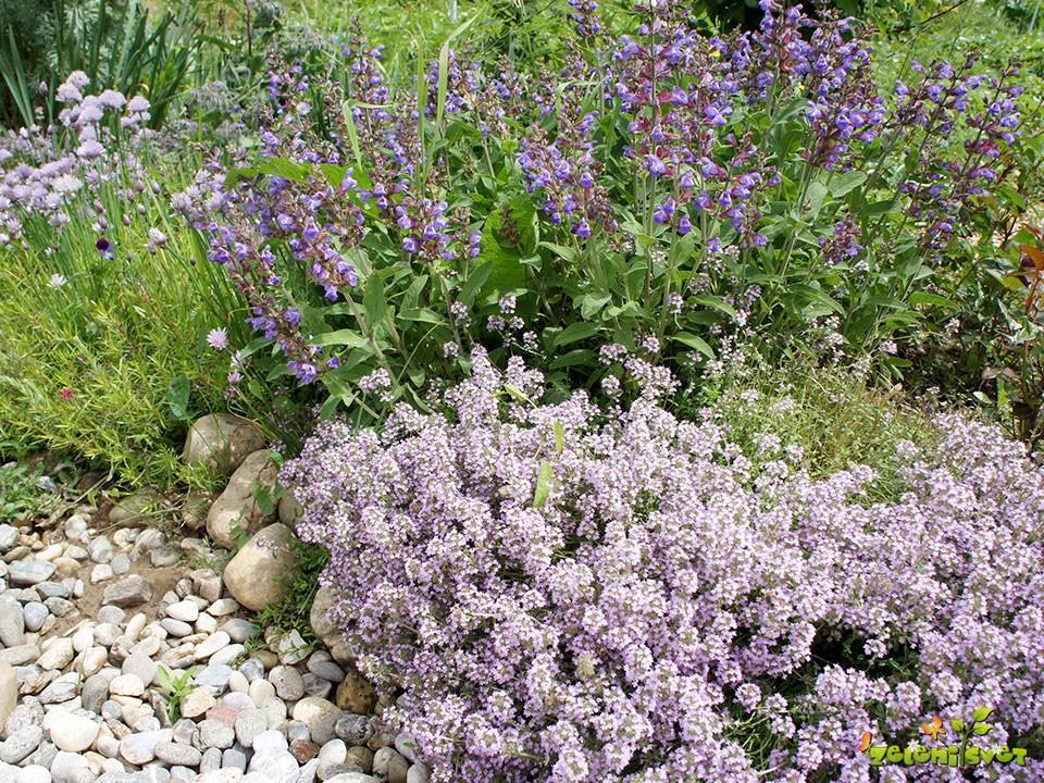 Zelišča, dišavnice in zdravilne rastline