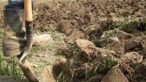 Prekopavanje tal v vrtu