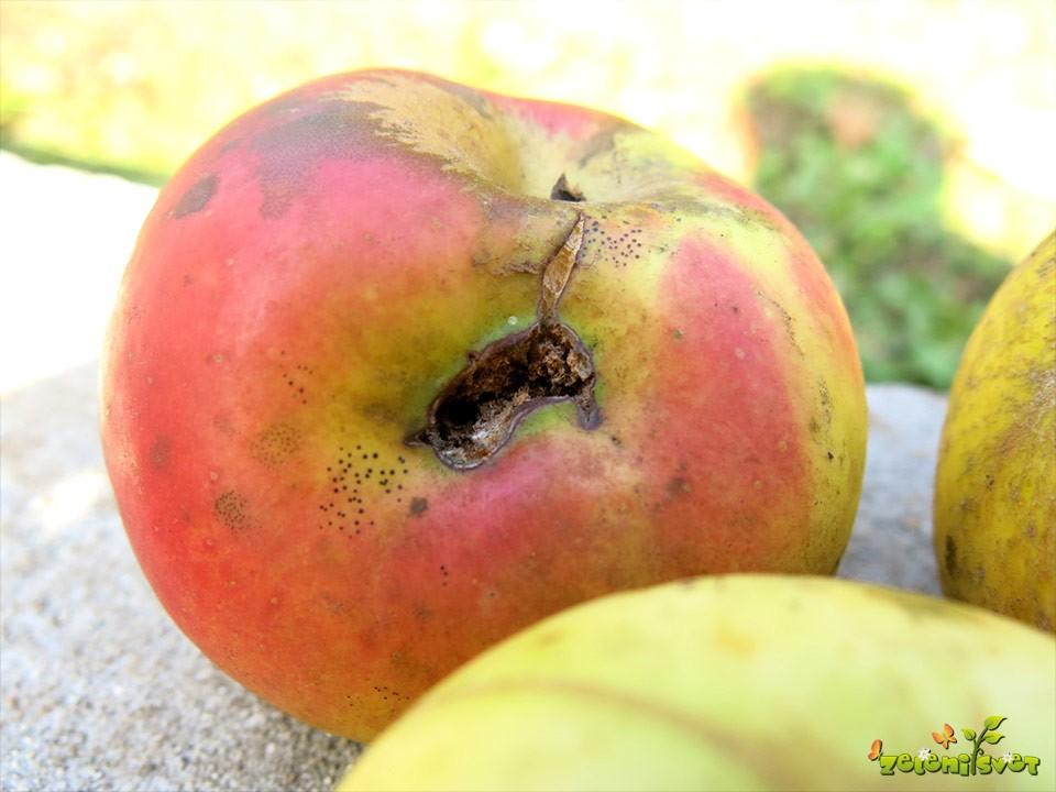 jabolko poškodovan plod