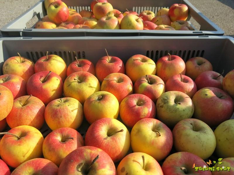 Skladiščenje sadja v domači kleti