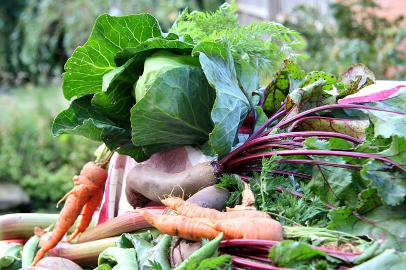 Kolobar in gnojenje v zelenjavnem vrtu