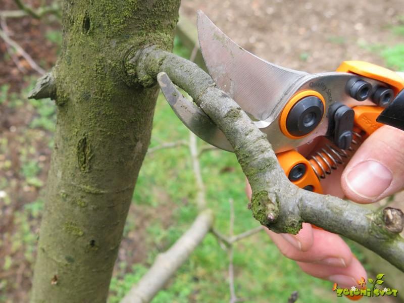 Rez sadnega drevja