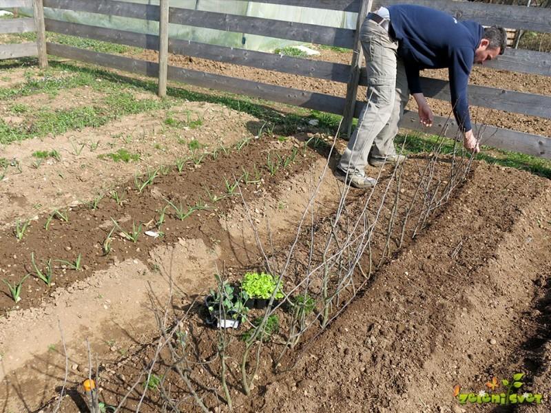 Kako kombiniramo vrtnine in zelišča