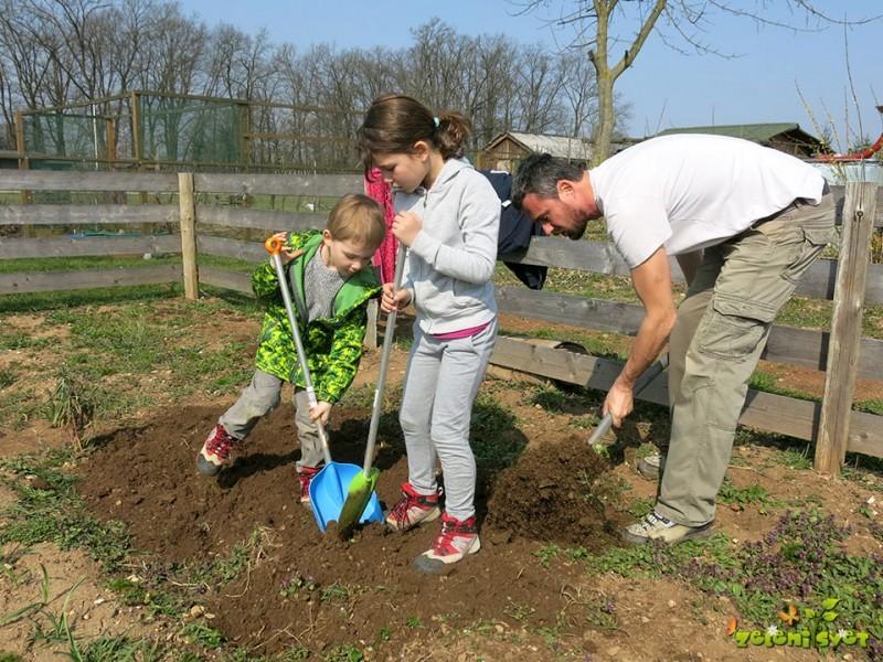 Sajenje čebule, česna in družina v vrtu