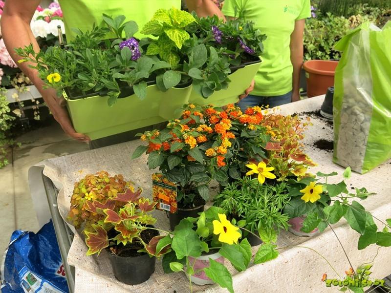 Cvetoči paradiž in manjša poraba vode