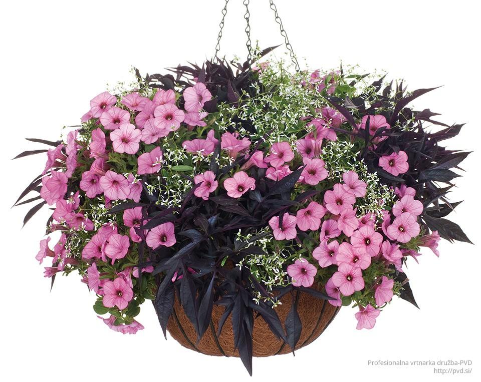harmonicna-cvetoca-zasaditev