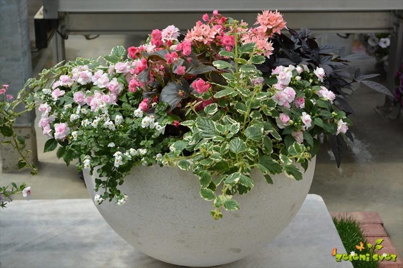 Modne balkonske zasaditve