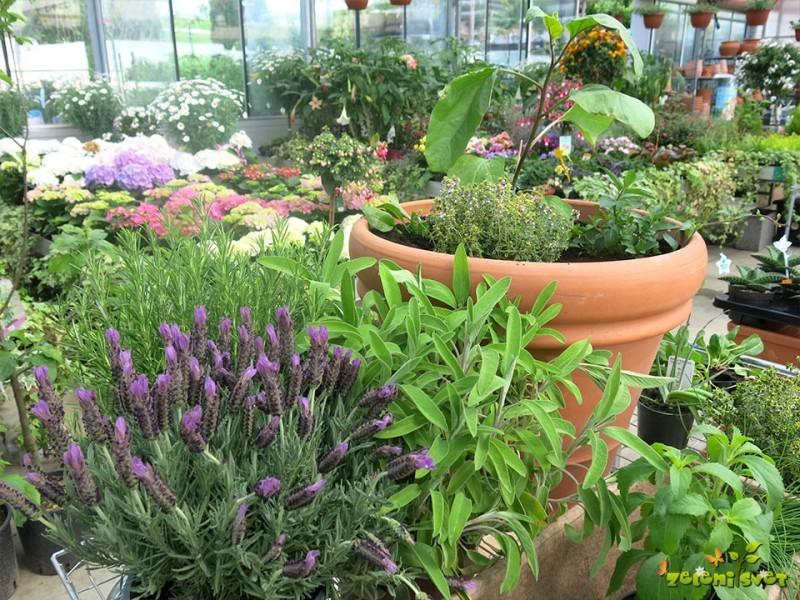 Urbano vrtnarjenje za vsakogar