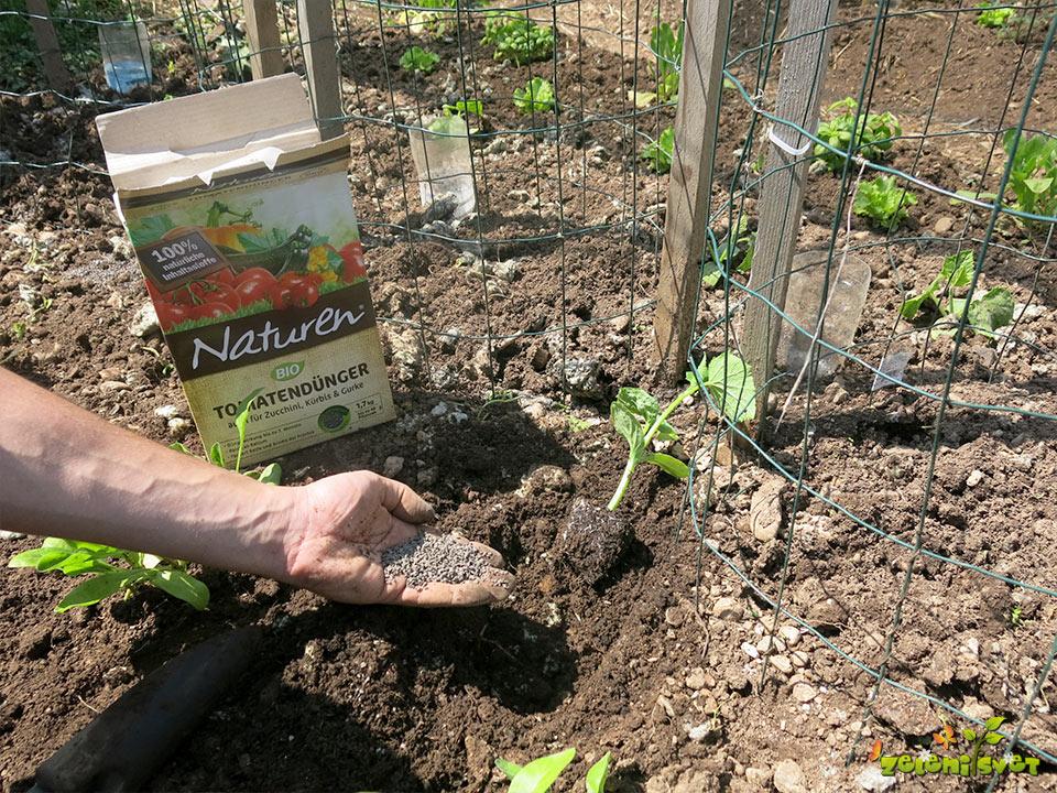 Gnojenje kumar z organskim gnojilom.