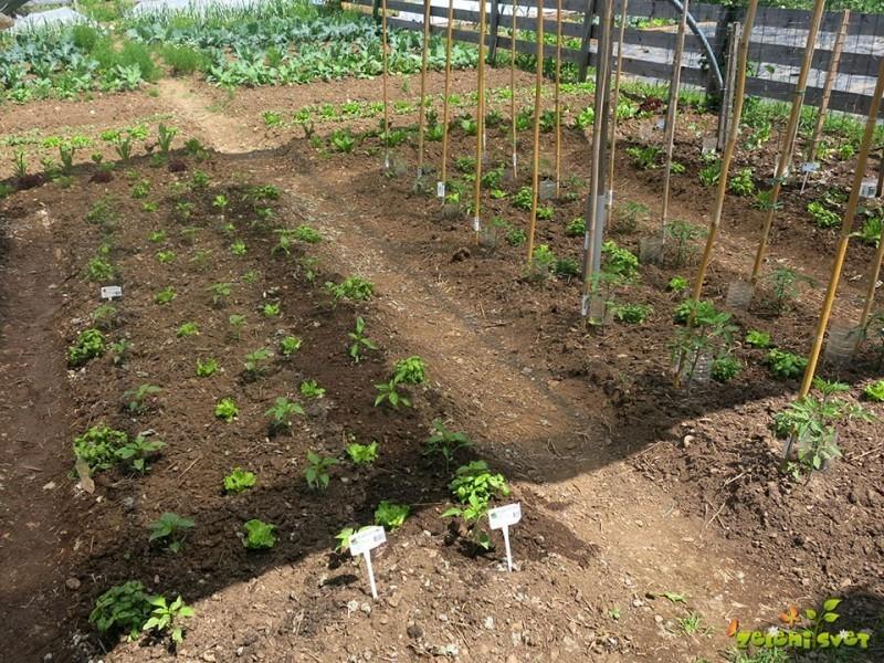 Kolobarjenje s paradižnikom, papriko in drugimi plodovkami