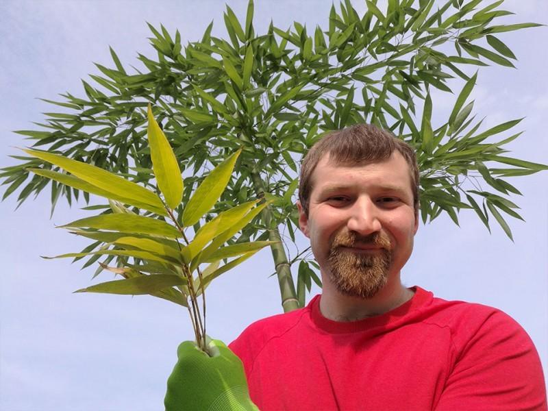 Orjaški bambus