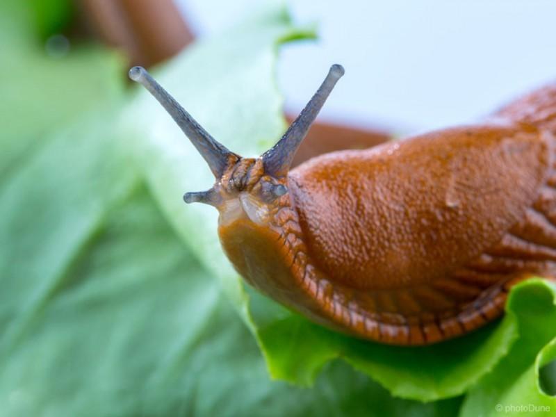 Ekološke rešitve proti polžem