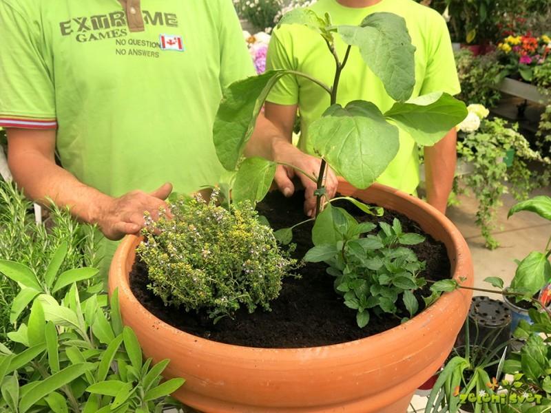Zeliščni, sadni in zelenjavni vrt na balkonu