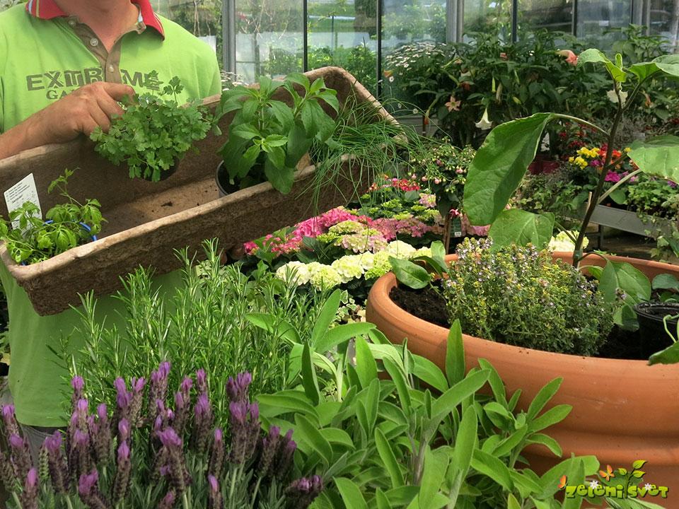 zasaditev-korito-zacimbe-zelisca