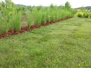 5 rešitev za staro in novo travo