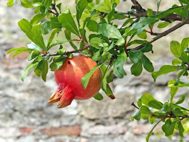 Odporna figa in granatno jabolko, limona, mandarina in pomaranča