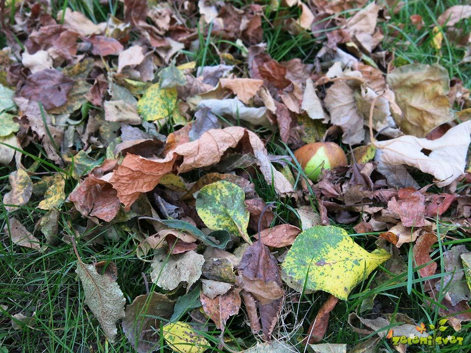odpadlo-listje