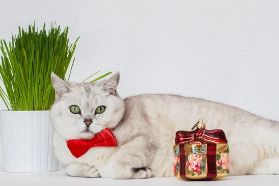 bozicno-zito-macek