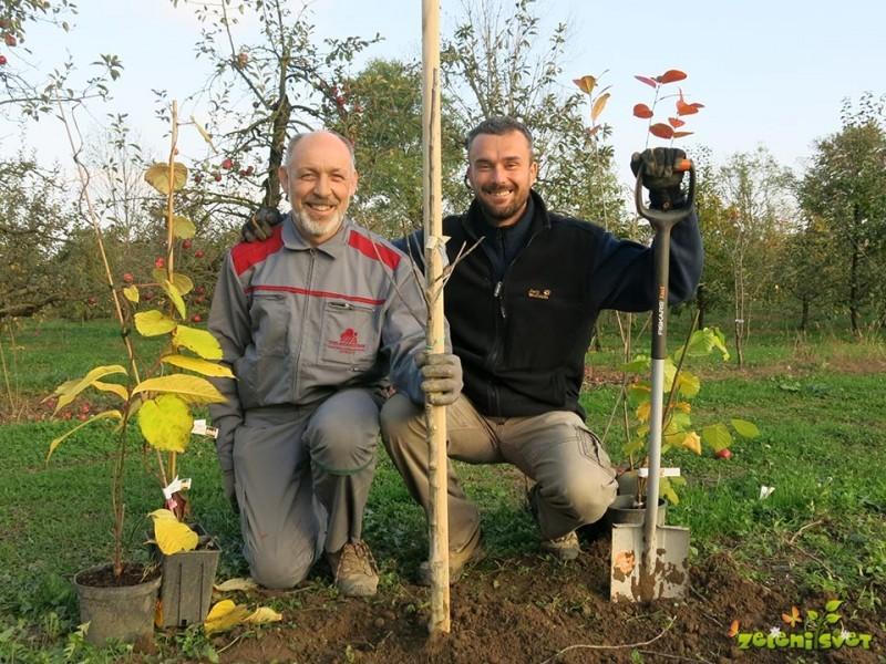 Kaj sadimo jeseni v domačem vrtu?