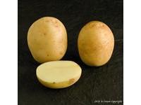 semenski-krompir-casablanca