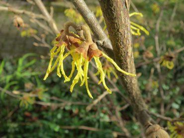 30 rastlin, ki so najlepše pozimi