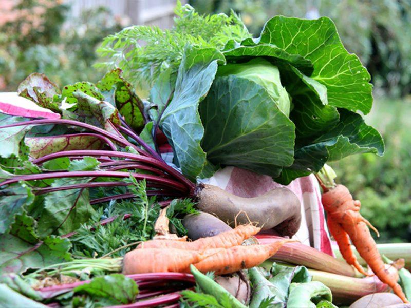 Najboljša zelenjava iz semena