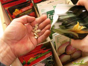 seme bučke v roki
