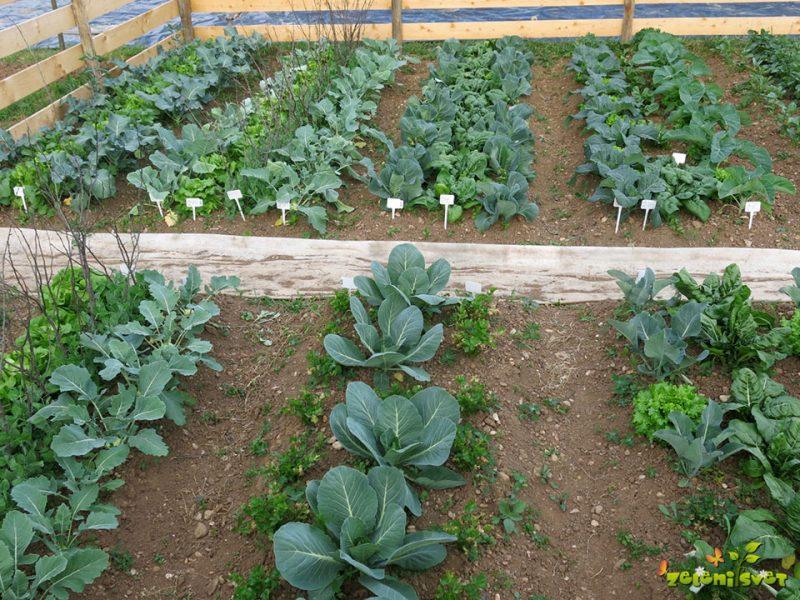 Kaj delamo marca v vrtu?