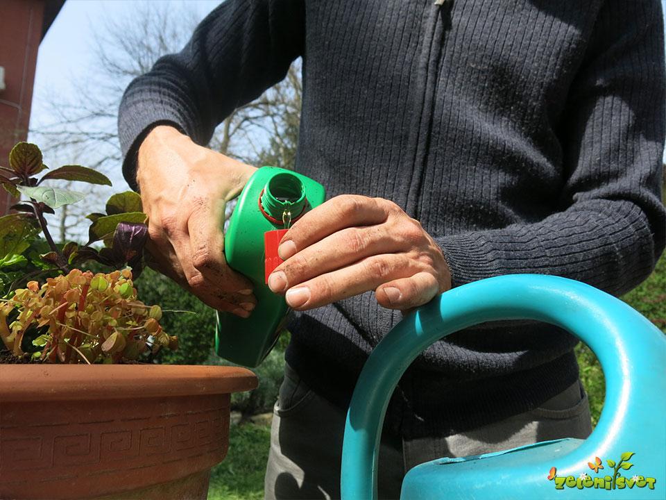 Doziranje tekočega gnojila za rože.