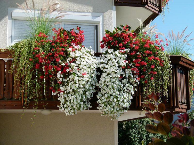 Balkonska cvetoča pravljica